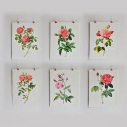 Set Of Six Redouté Rose...